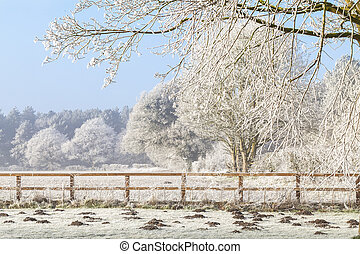 heuvels, omheining, scène, bomen, mol, winter