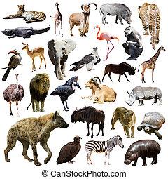hiéna, más, állatok, afrikai