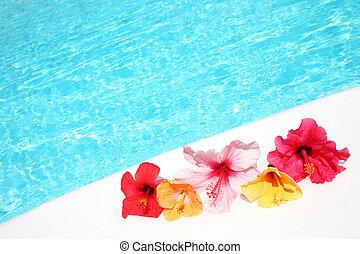 hibicus, fleurs, piscine