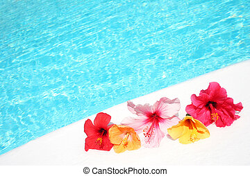 Hibicus Flowers by Pool