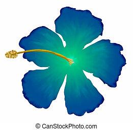 hibisco azul