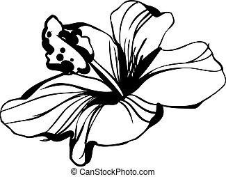 hibisco, bosquejo, florecer, brote flor