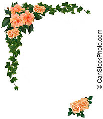 hibisco, floral, hiedra, rosas
