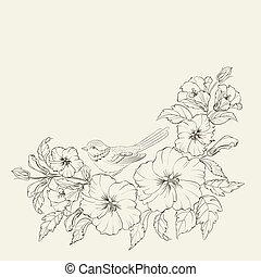 hibisco, fondo blanco