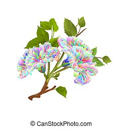 hibisco, multi coloriu, fundo, vector.eps, ramo, branca