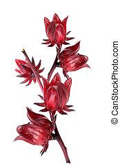 hibisco, sabdariffa, roselle, ou, frutas