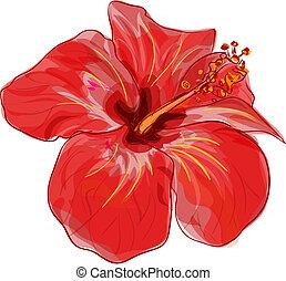 hibisco, vector, rojo, flower., image.