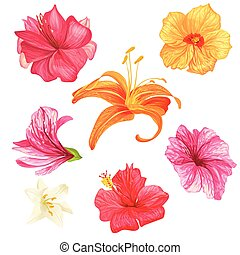 Hibiscus and lily flowers.