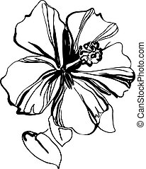 hibiscus black and white sketch drawing a houseplant