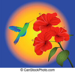 hibiscus, en, het zoemen, vogel