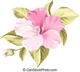 hibiscus, exotique, flower.