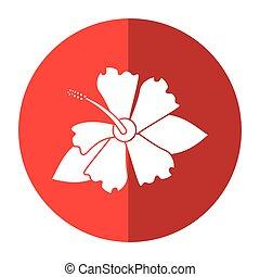 hibiscus, exotique, ombre, fleur