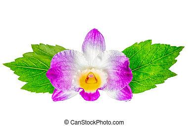 hibiscus, fleur, feuilles, composition, vert, dendrobium