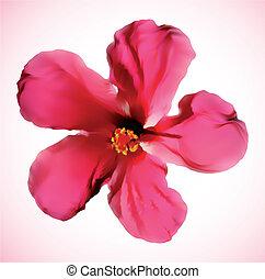 hibiscus, fleur, isolé, vecteur, white., rouges