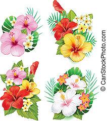 hibiscus, fleurs, arrangement