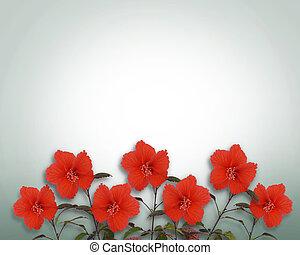 hibiscus, fleurs, frontière