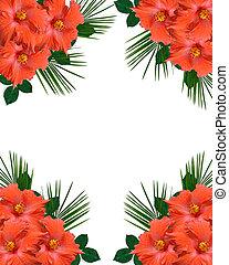 hibiscus, fleurs tropicales, frontière