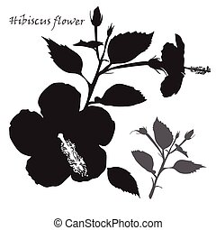 Hibiscus flower.  Black silhouette on white background