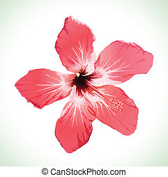 Hibiscus flower blossom vector illustration