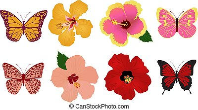 hibiscus flower butterfly