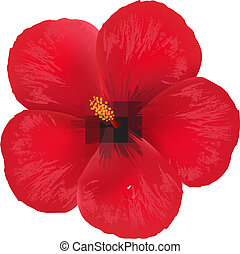 Hibiscus Flower, Isolated On White Background, Vector...