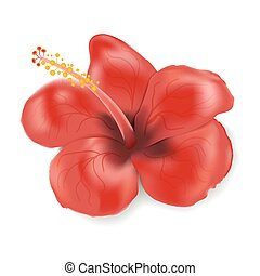 Hibiscus flower in realistic style isolated on white background. Vector illustration with red flower. Summer tropical vacation symbol