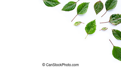 Hibiscus flower leaves on white background.