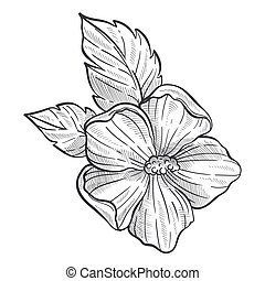 Hibiscus flower sketch, wild plant pencil drawing - Hibiscus...