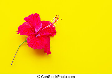 Hibiscus flower with leaves on yellow background.