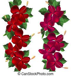 hibiscus, gemaakt, samless, witte bloemen, grens