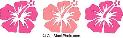 hibiscus, rose, nuances, fleurs