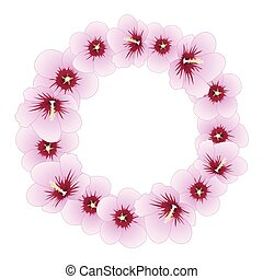 hibiscus, sharon, syriacus, rose, couronne, -