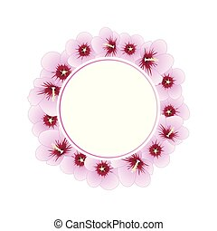 hibiscus, sharon, syriacus, rose, couronne, -, bannière
