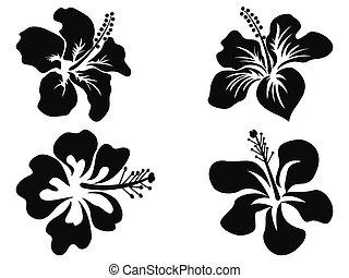 hibiscus, silhouettes, vecteur
