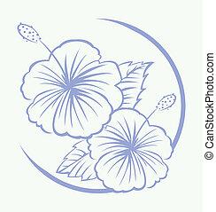hibiscus, symbole, fleur