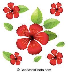 hibiskus, blomningen, design, seamless, bakgrund