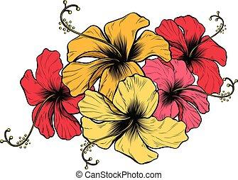 hibiskus, blomningen