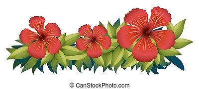 hibiskus, busch, grün rot
