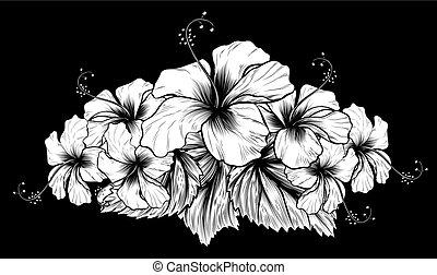 hibiskus, gravyr, etsning, träsnitt, årgång, blomningen