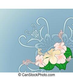 hibiskus, illustration