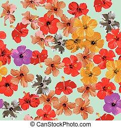 hibiskus, mönster, blomningen, seamless, bakgrund