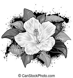 hibiskus, vita blomma, teckning