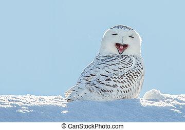 hibou, bâiller, neigeux, -, neige, /, sourire