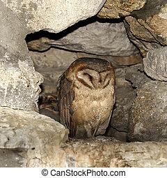 hibou, caverne