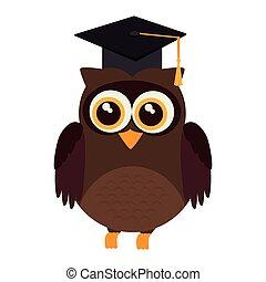 hibou, diplômé, universitaire