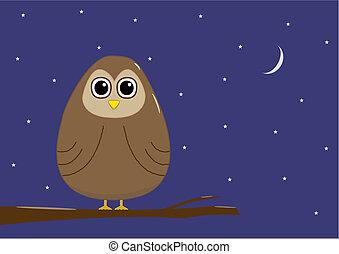 hibou, nuit