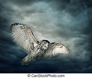 hibou, oiseau volant