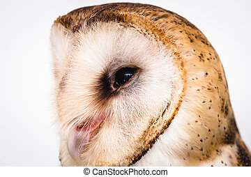 hibou, photo, owl., élevé, la plupart, commun, résolution, espèce, world.