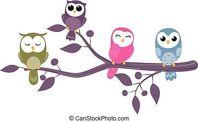 hiboux, branches, séance