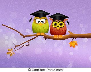 hiboux, diplômé